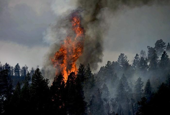 Condução em zona de incêndios