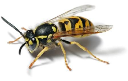 Como tratar de um insecto que se aloja dentro do carro