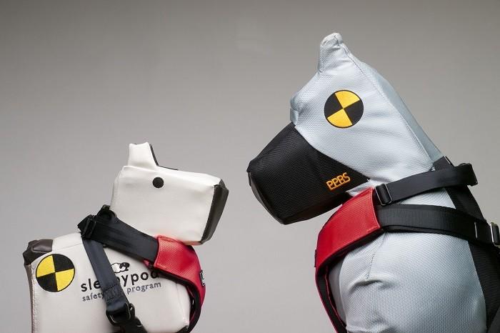 O seu cão usa cinto de segurança?