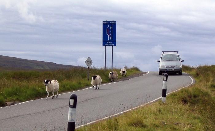 animais na estrada