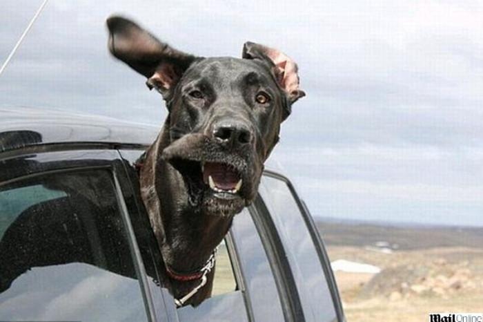 Vai viajar? Saiba que cuidados deve ter para transportar o seu animal de estimação sem que ambos corram perigo.