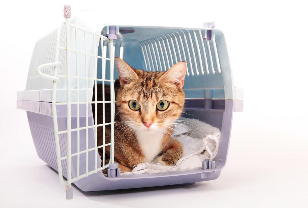 Diferentes formas de transportar animais no carro