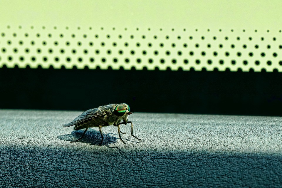 O que fazer quando entra um inseto no carro durante a condução?