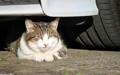 Cuidado com quem se abriga nas rodas do seu carro