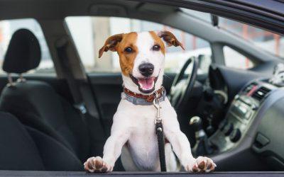 Seis mandamentos para levar o seu cão no carro de forma segura