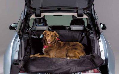 Como transportar cães e gatos em segurança no automóvel?