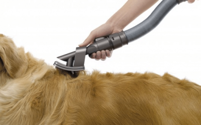 Quais os melhores truques para limpar pelos de animais dos bancos do carro?