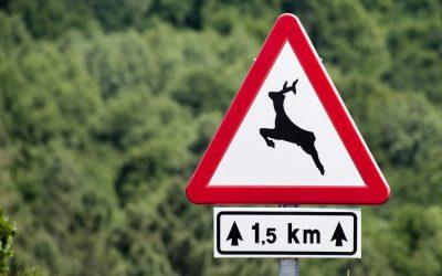 Passagens para animais: estradas respeitosas com a fauna